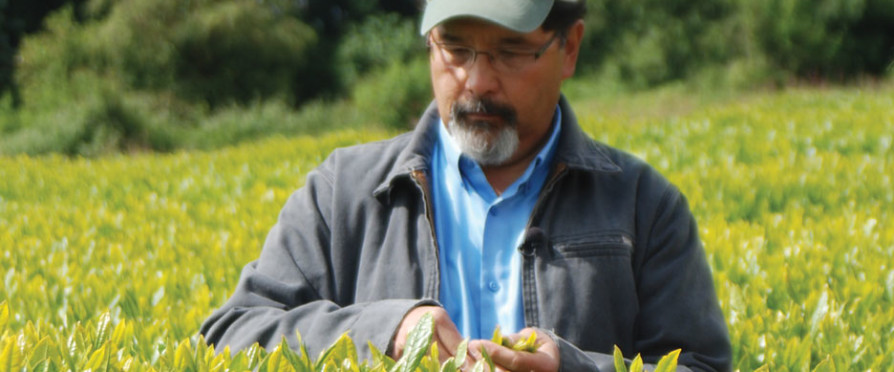 Building an American Tea Terroir