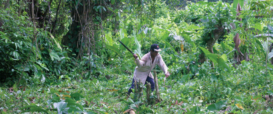 Frederico Palacios clearing a patch of jungle in the Ngöbe-Buglé Comarca. (Photos: Rachel Northrop.)