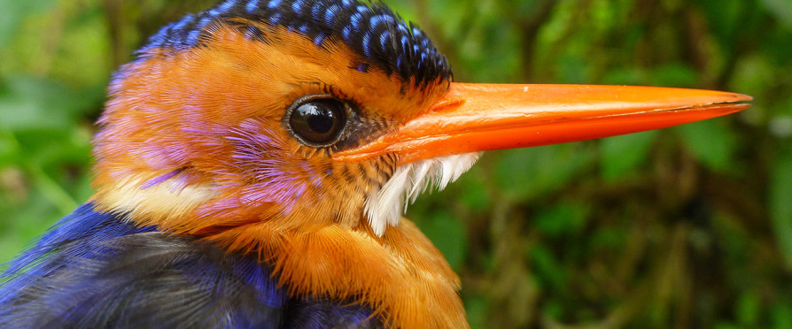 The Most Bird-Friendly Coffee
