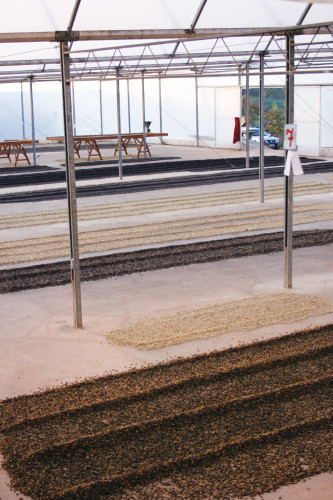 DryingBeds