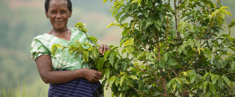 Let's Talk Coffee Suspends Brazil, Adds Rwanda