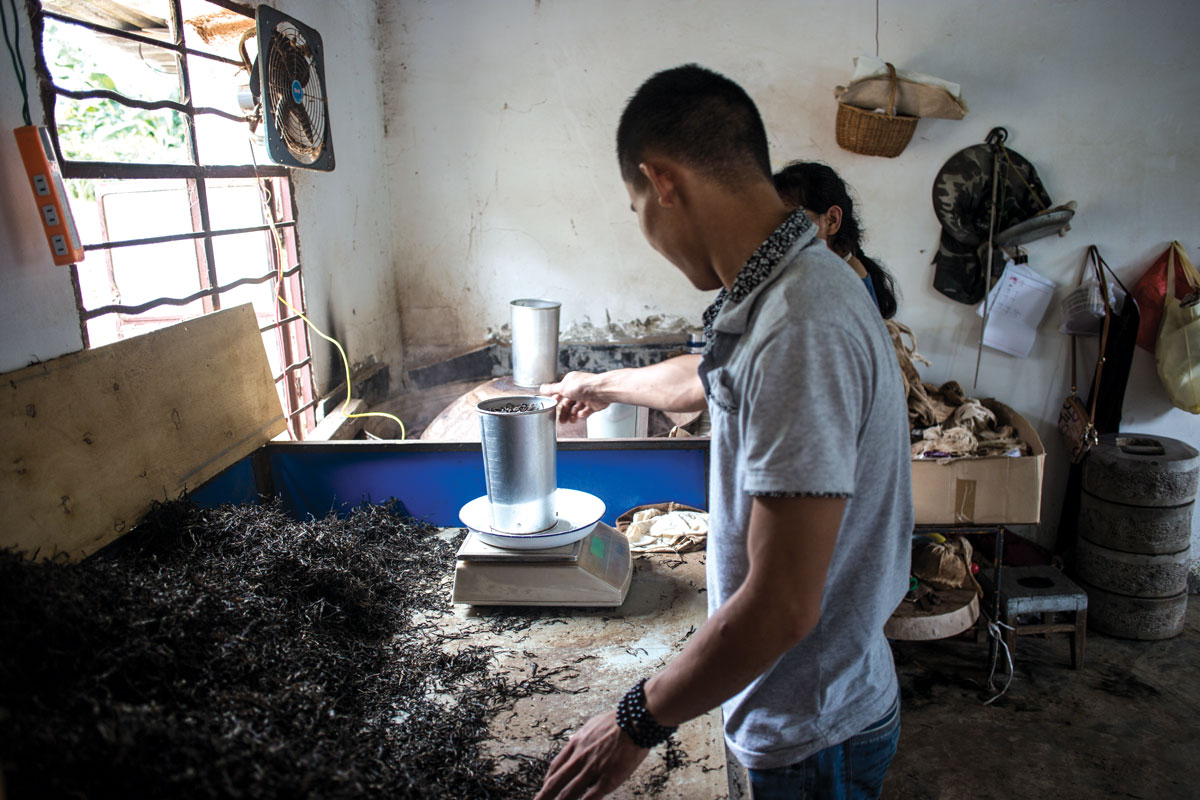 Processed pu-erh is weighed before being pressed into a bing.