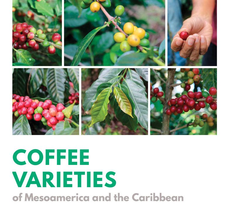 coffee, specialty coffee, world coffee research, wcr
