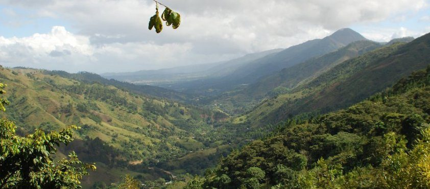 Diving into Dominican Coffee Production