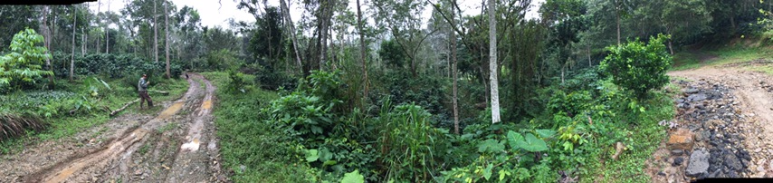 Dominican Coffee Production ; Spirit Mountain Coffee farm
