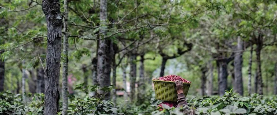 The Premature Aging of Coffee