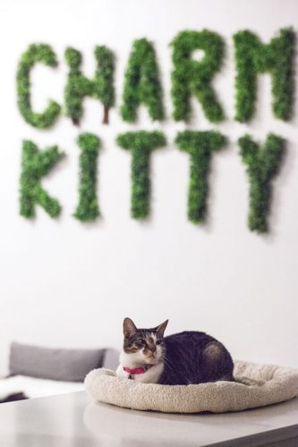 Charm Kitty sign and resident cat