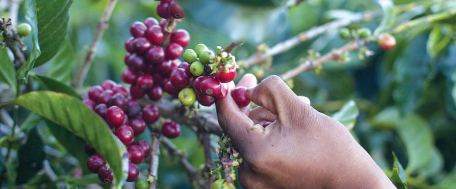 SCA Announces New Coffee Price Crisis Response Initiative