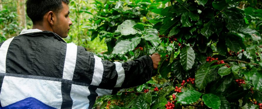 Growing the Next Generation of Coffee Farmers