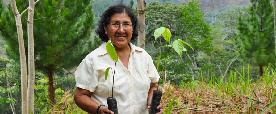 Crowdfunding Campaign Launches to Help the Peruvian Amazon